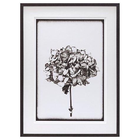 buy scott dunwoodie hydrangea framed print 68 x 51cm online at johnlewiscom