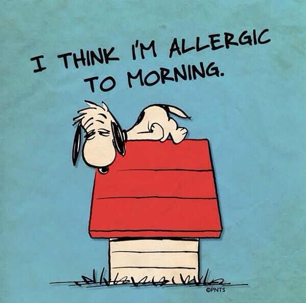 Snoopy Not A Morning Person Funny Quotes Snoopy Quotes Snoopy