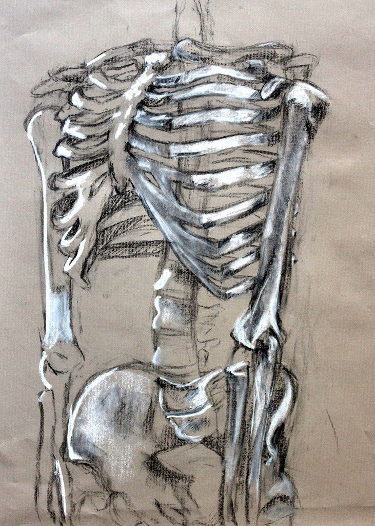 clara lieu, skeleton drawing assignment, conte crayon on toned, Skeleton