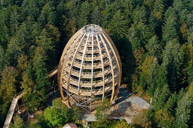 En fotos: un fascinante paseo por las alturas para conocer el bosque de Baviera