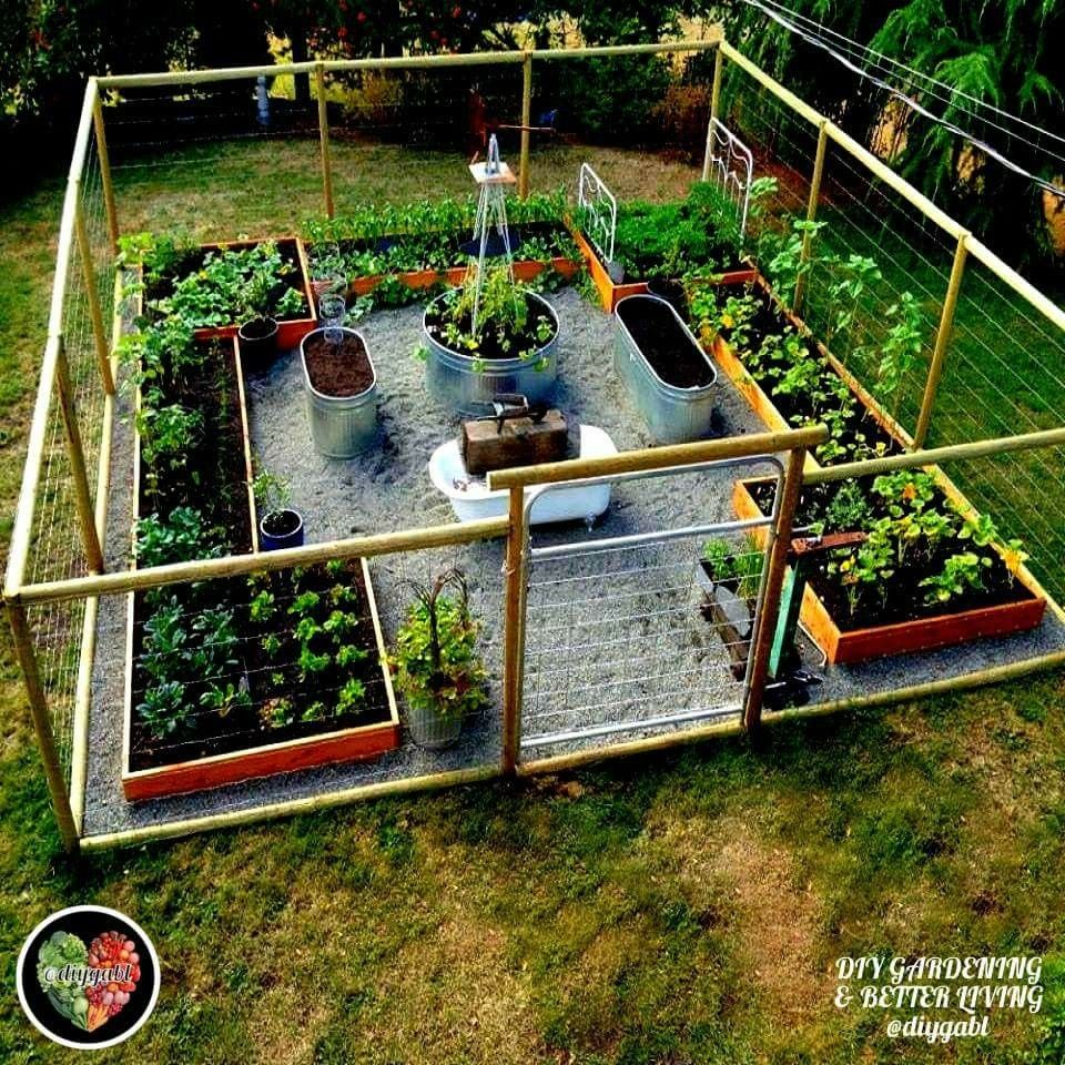 Back Yard Potager: Vegetable Garden Design