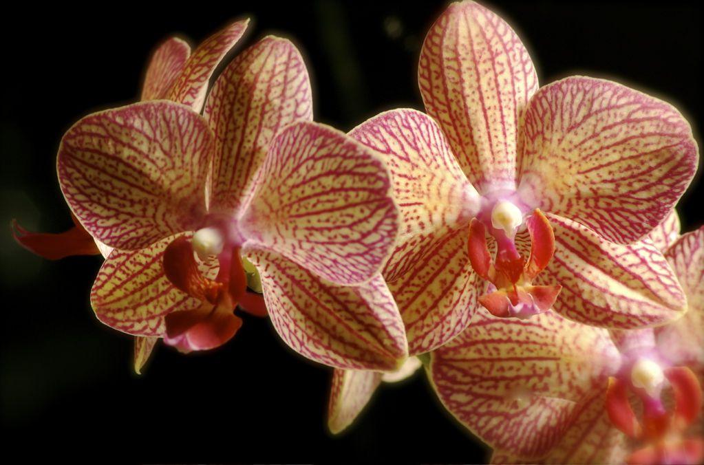 Unusual Rain Forest Animals | Tropical Rainforest Animals And ...
