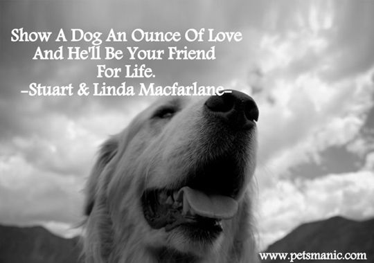 Love My Dog Quotes 26 Dog Quotes About Love And Compassion  Dog And Animal
