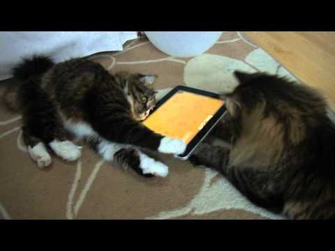 Ipad apps for cats