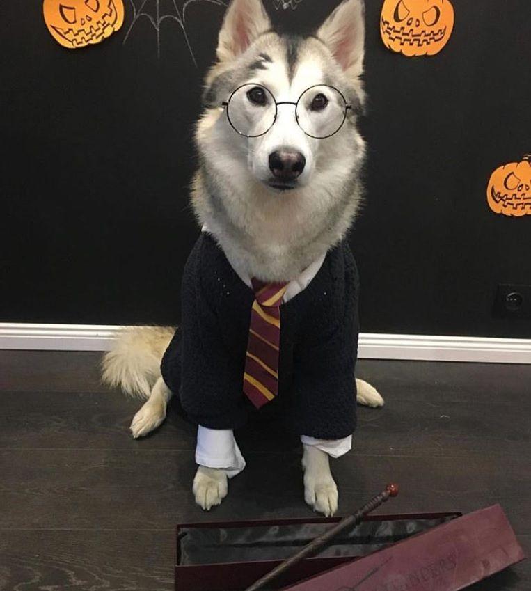 12 Costumes That Prove Huskies Always Win At Halloween Dog