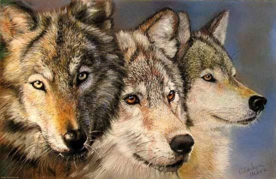 My Friend The Wolfs Photo