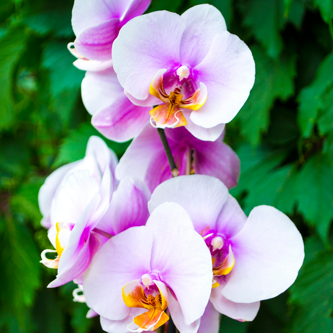 3 Incredible Orchid Facts That You Need Know In 2020 Orchids Flowers Plants