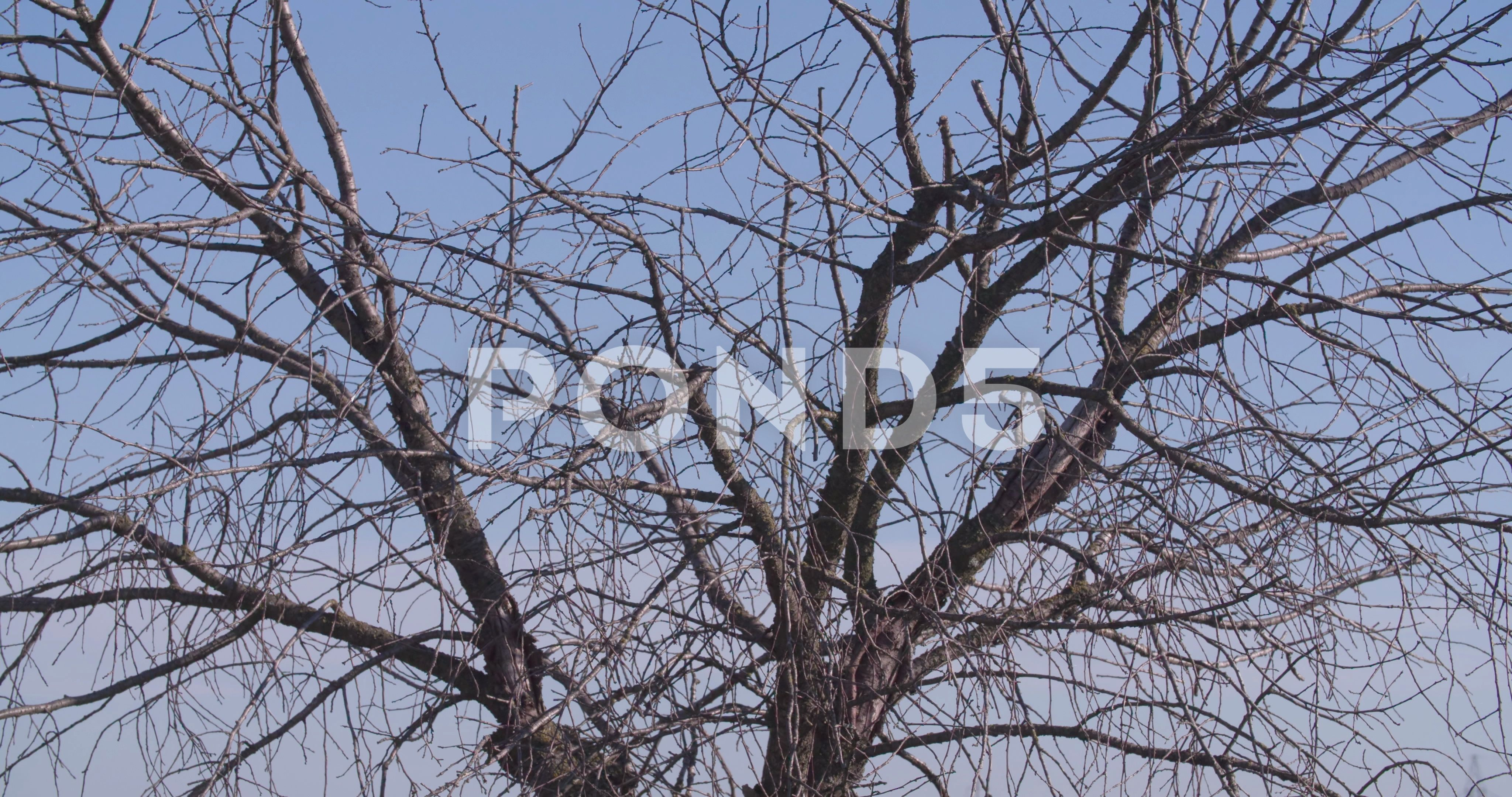 Dry Tree Without Leaves 4k Nature Video Autumn Tree Branches On Clear Sky Stock Footage Nature Video Leaves Dry Dry Tree Nature Gif Autumn Tree Branch