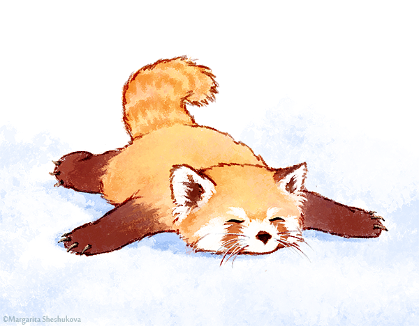 Red panda deviantart ♡ more