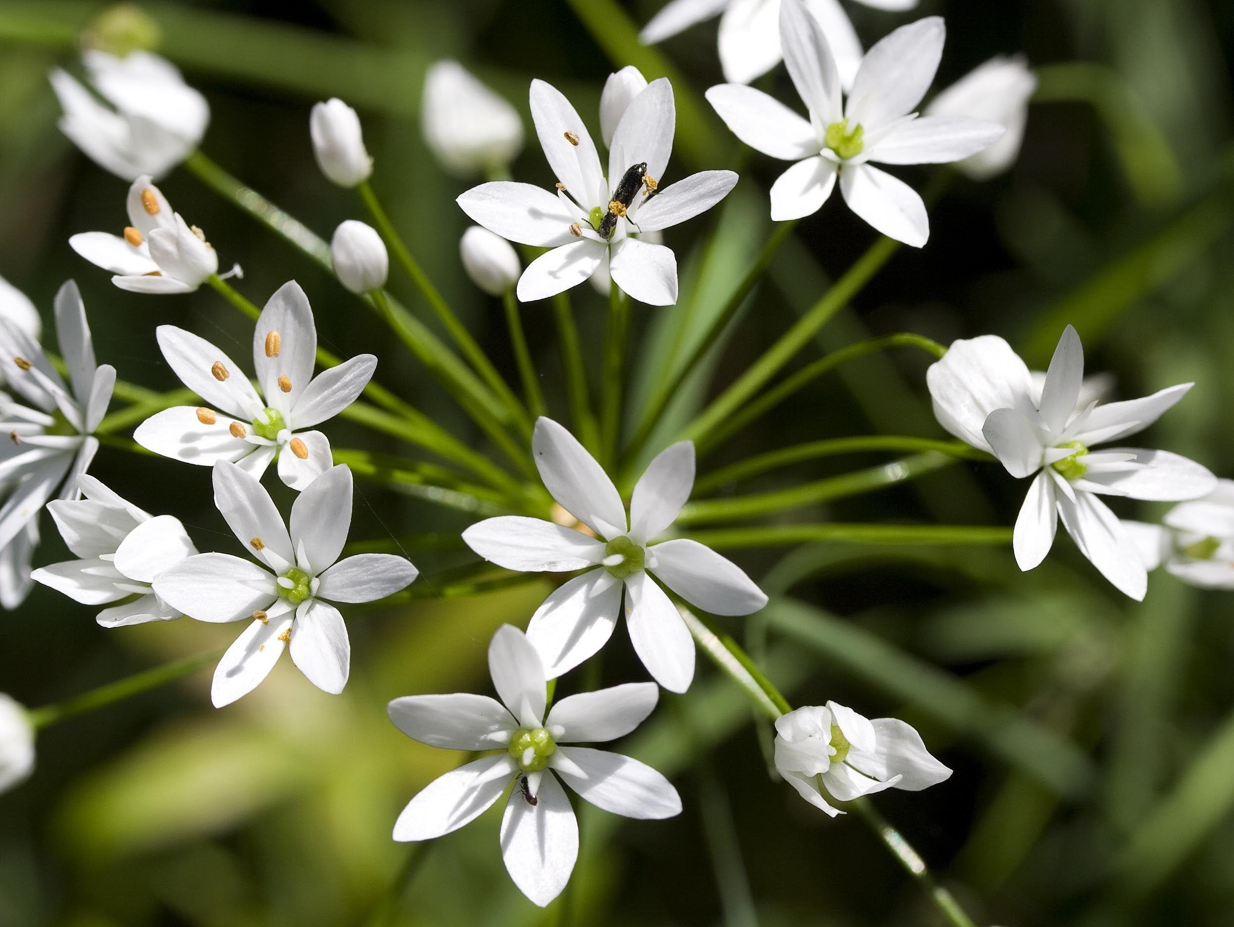 wild flowers related keywords u0026 suggestions wild flowers long