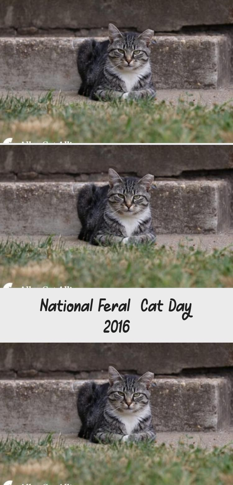 My Blog En Blog in 2020 Feral cats, Cat day, Cat