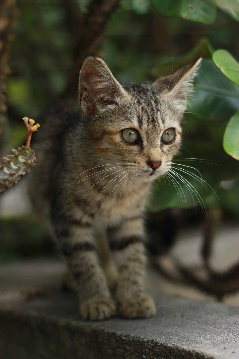 Top Unusual Cat Breeds On Earth. Cute cats, Pets and Kittens