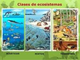 Resultado De Imagen De Ecosistemas Acuaticos Maquetas Science And Nature Science Experiments Kids Nature