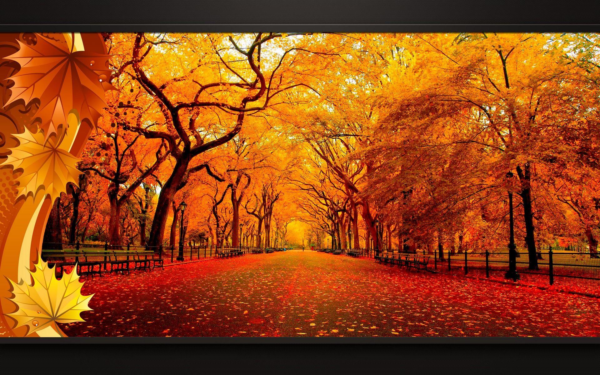 Automne fond ecran paysage feuilles arbres sous bois foret for Image fond ecran ordinateur gratuit