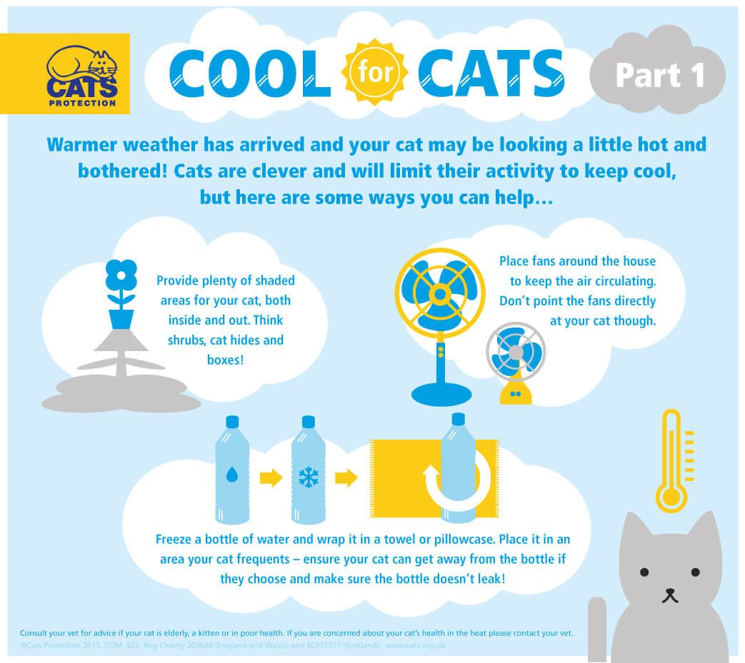 Keeping Cats Cool This Summer Part 1 Katzenworld Cat Care Cat Care Tips Cat Health