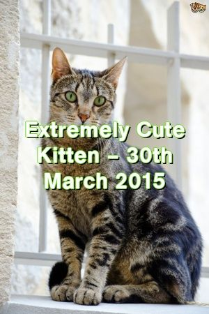 Michelle Ogden Tells About Extremely Cute Kitten – 30th March 2015   #catbreeders  #catlover  #world  #gatos  #Cats  #Choose  #Cats  #Patterns