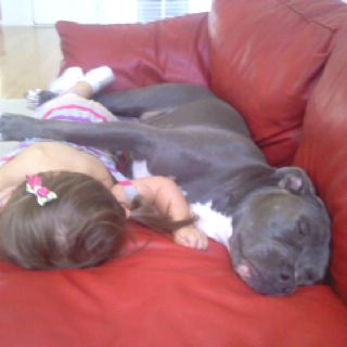 Lily and Cricket the pit bull!