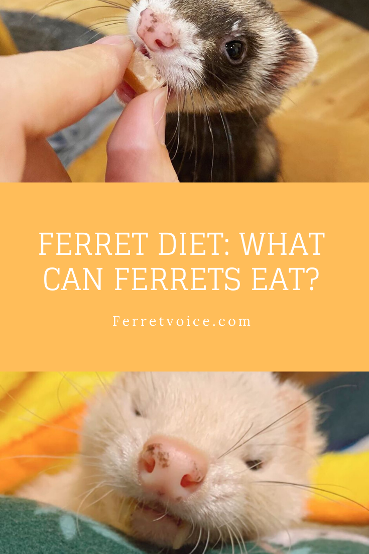 The Only Guide To Learning Ferret Diet You Ever Need Ferret Diet Ferret Diet