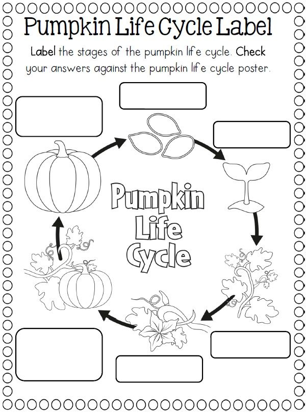 Life Cycles Pumpkin Life Cycle Life Cycles Kindergarten Science