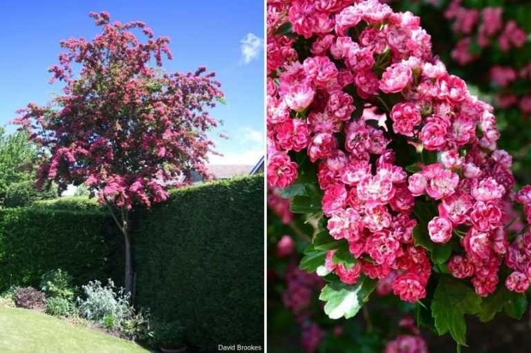 Arbre Pour Petit Jardin Arbres Pour Petit Jardin Petits Jardins Jardins