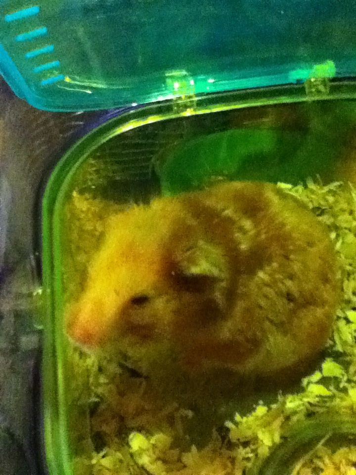 MY HAMSTER!! HIS NAME IS EVANN