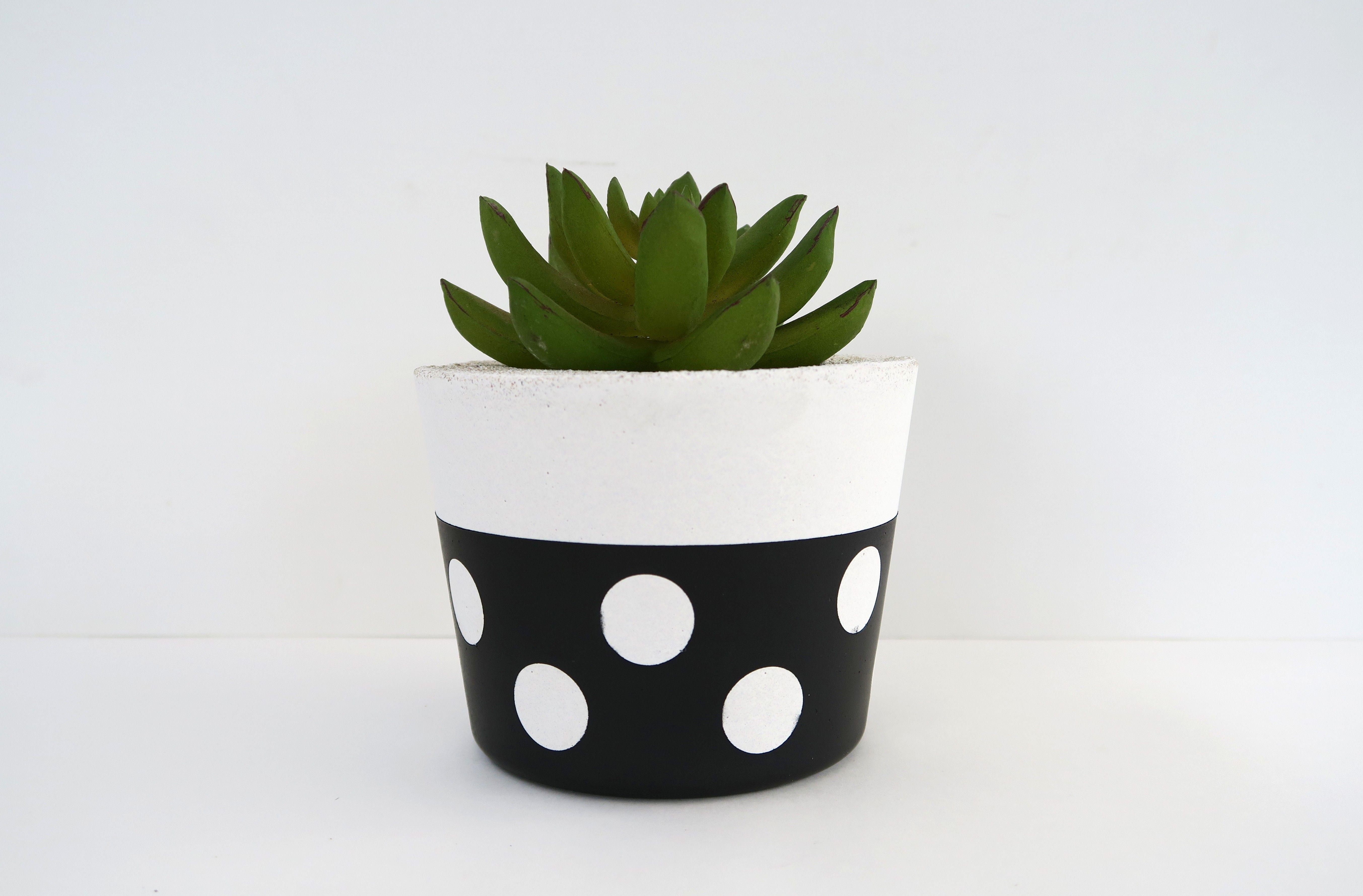 Stocky Round Succulent Planter  Lotsa Dots