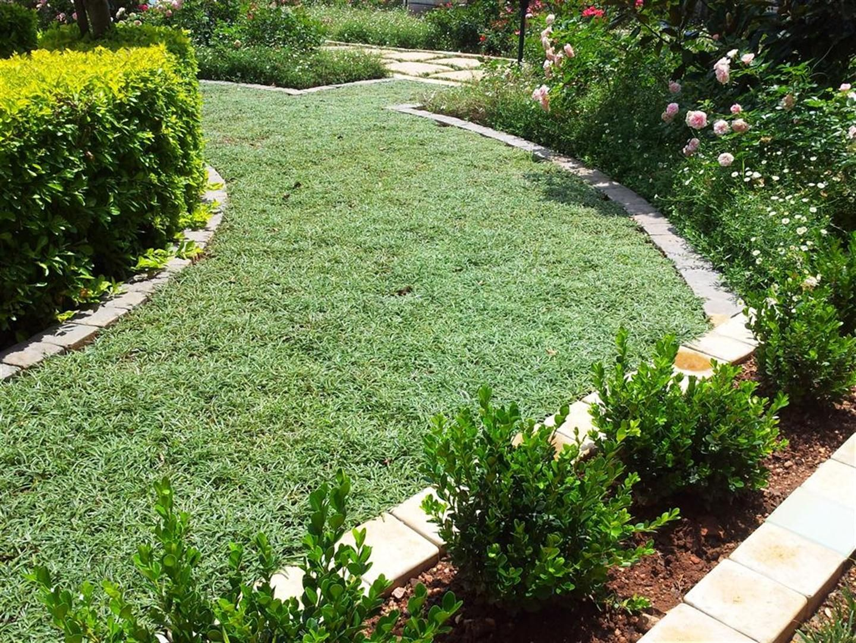 41 best dymondia lawns images on pinterest | lawns, backyard ideas