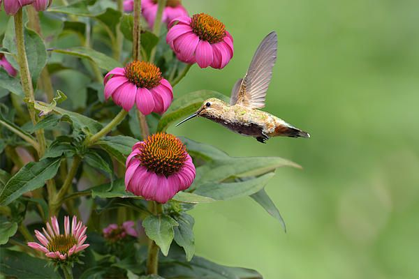 Title:  Summertime Hummer  Artist:  Lynn Bauer  Medium:  Photograph - Photography/digital Art