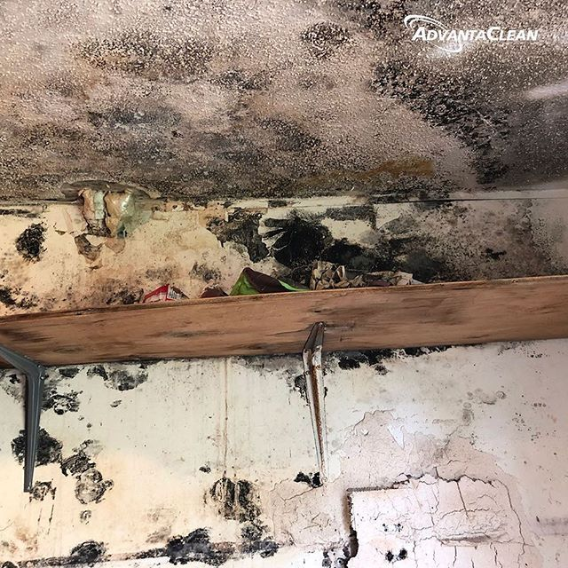 The first step of what gets rid of mold is to fix the