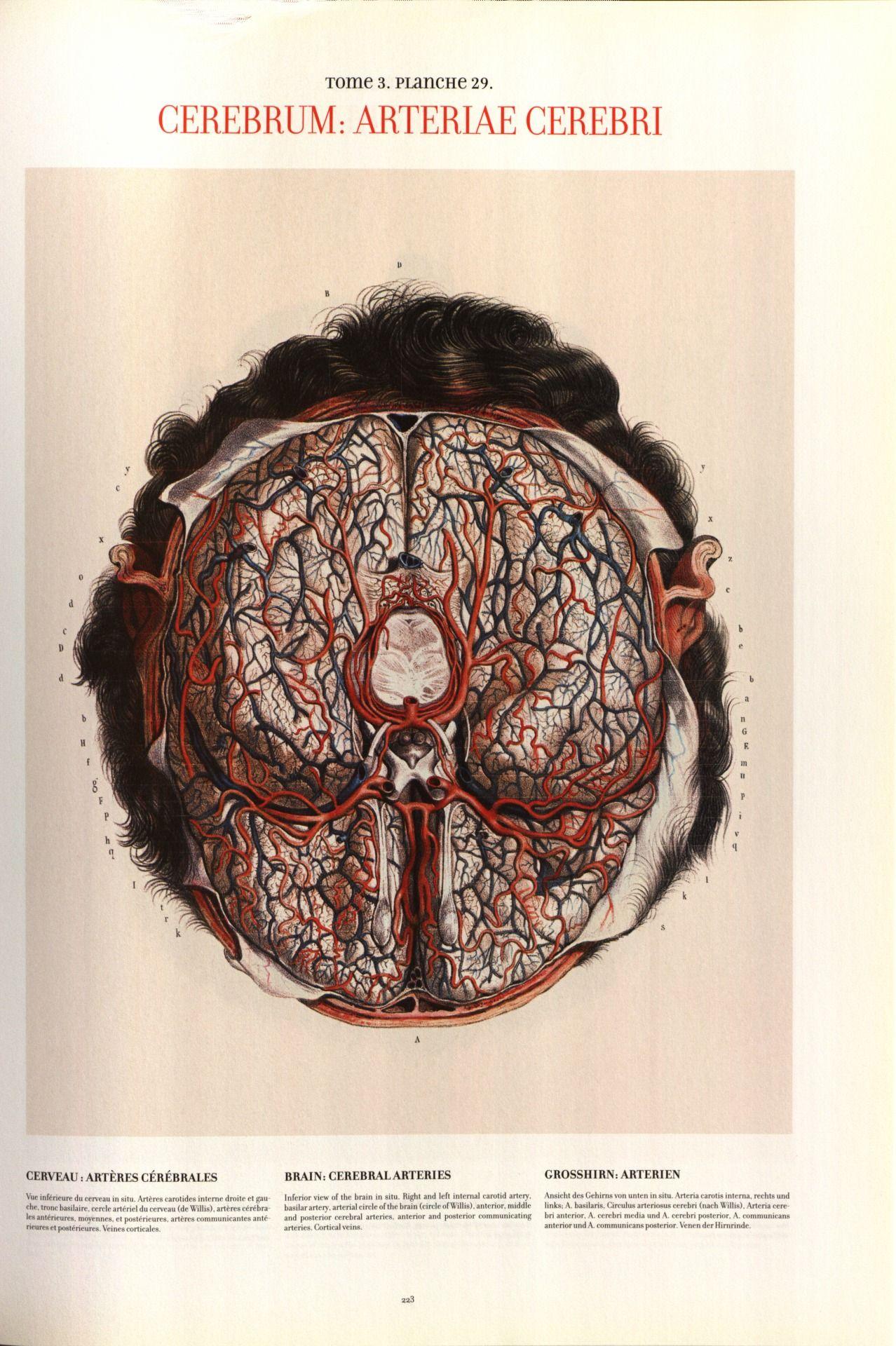 Nicolas Henri Jacob - Illustration for Traité complet de l\'anatomie ...