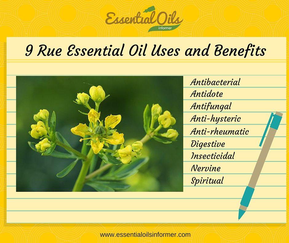 Rue Essential Oil Infographic | oils | Essential oils, Essential oil
