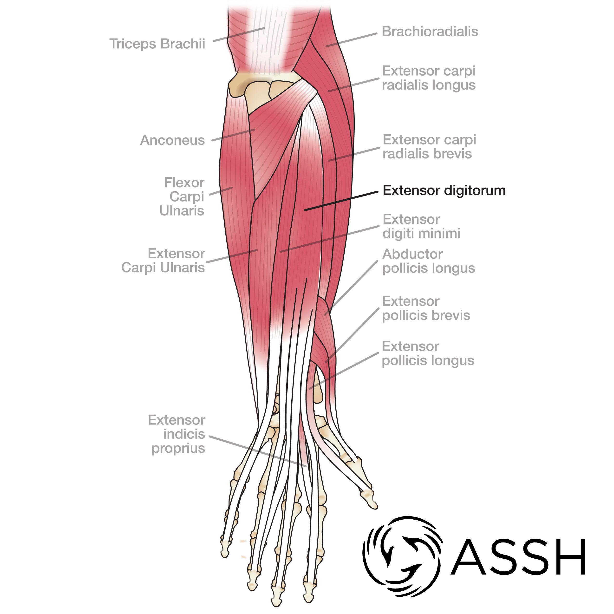Ungewöhnlich Druckstellen Anatomie Ideen - Menschliche Anatomie ...