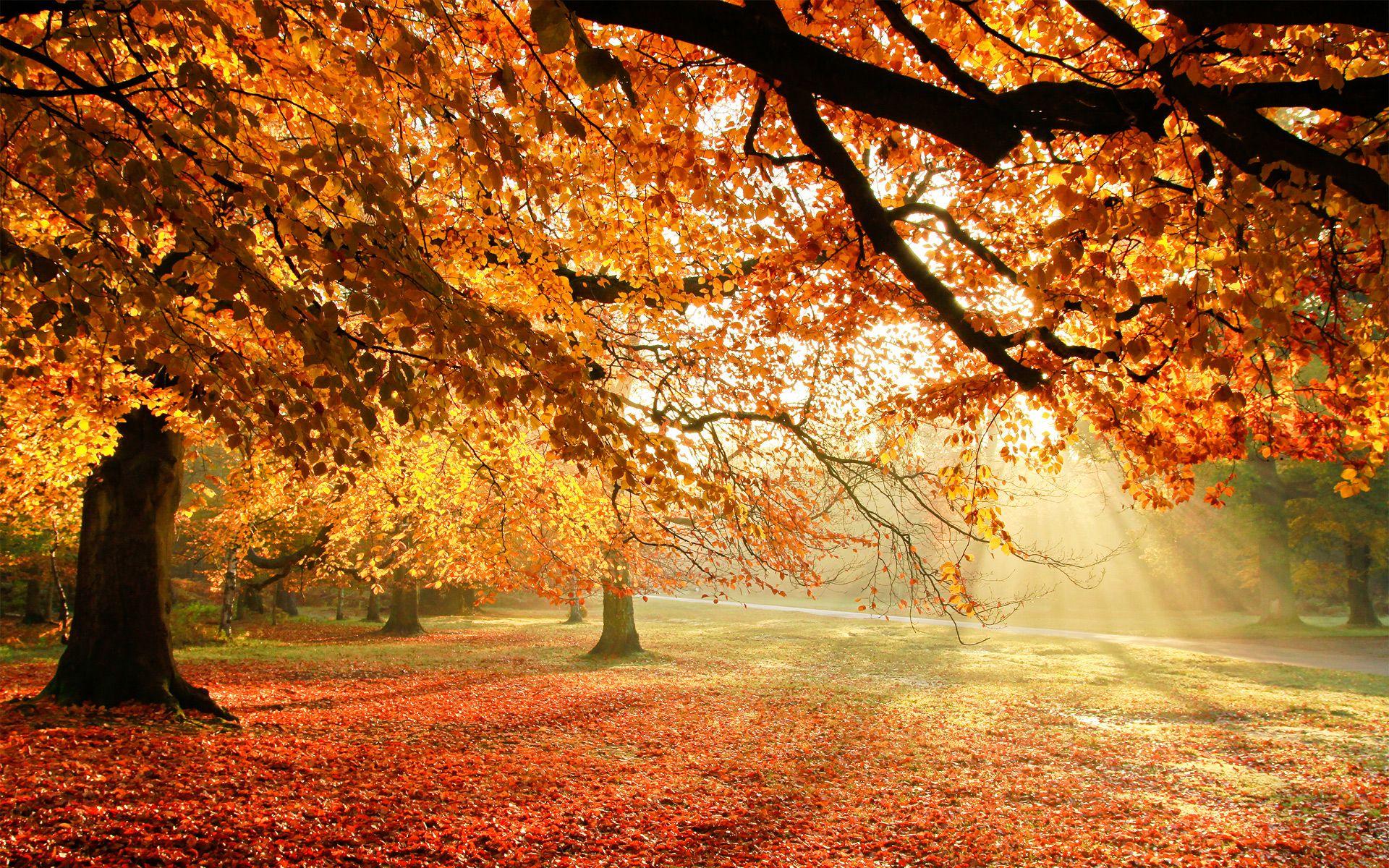 An Unconventional Thanksgiving Autumn Trees Nature Wallpaper Landscape