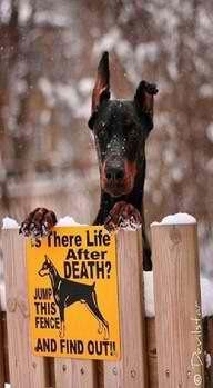 Pin by Lunye Fowler on Doberman Gang   Cute animals, Dogs ...