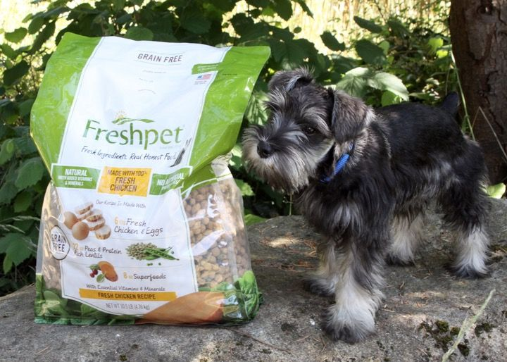 Freshpet Natural Pet Food Available At Target Natural Pet Food