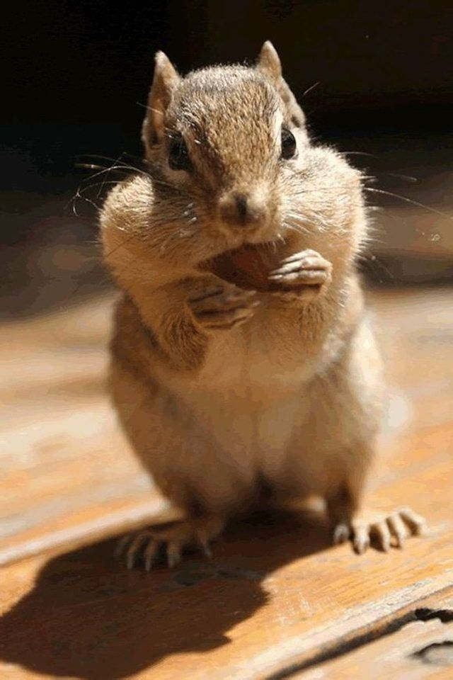 Cute Animal IPhone Wallpapers 640x960 22