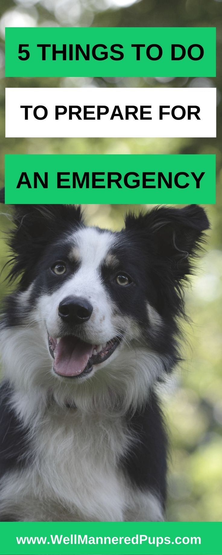Discussion on this topic: How to Get a Dog Ready for , how-to-get-a-dog-ready-for/