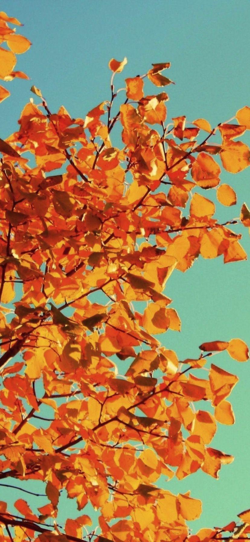 Iphone Xr Wallpaper Autumn Ipcwallpapers Fall Wallpaper Iphone Wallpaper Fall Phone Wallpaper Images