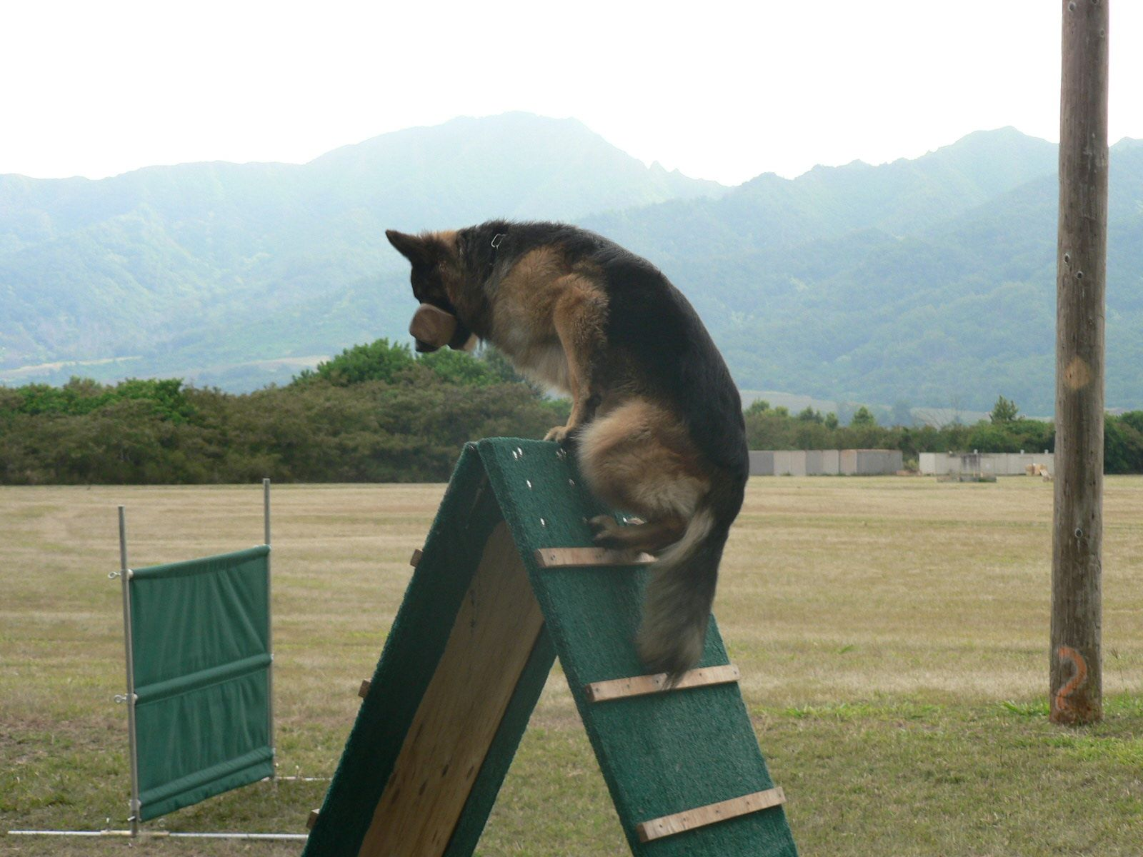 Pin By Bea Delgado On Working Dogs Military Working Dogs Schutzhund Military Dogs