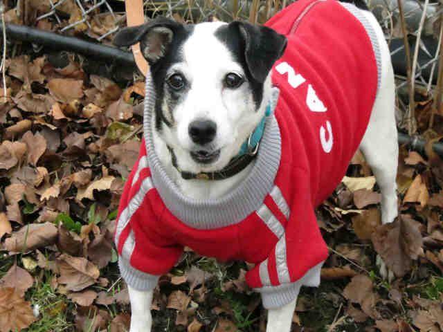 Lucy (A662074) Dog adoption, Humane society, Animal shelter