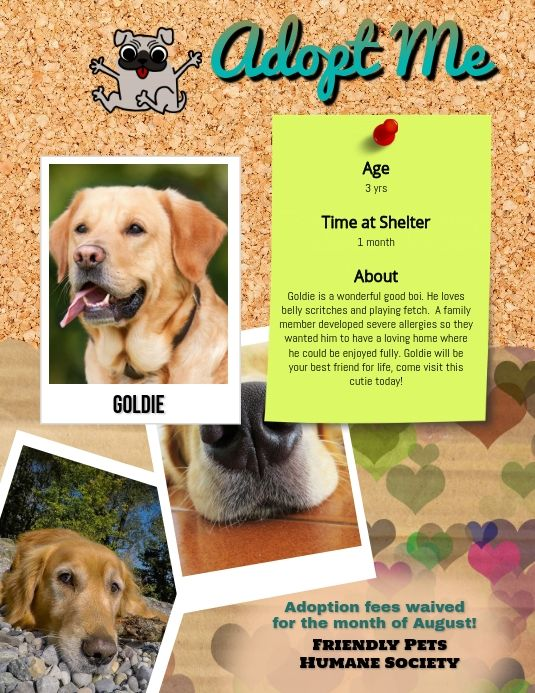 Pin On Lost Pet And Pet Adoption Flyers
