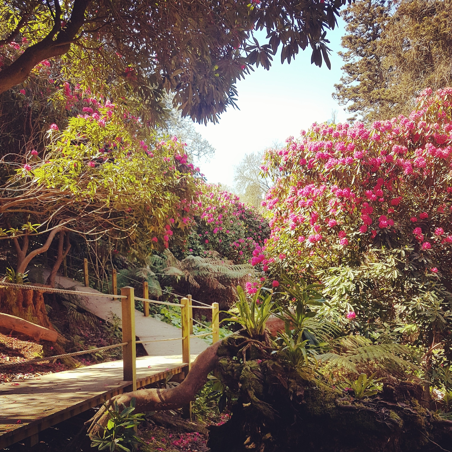 This Summer Discover The Stunning Tropical Gardens At The