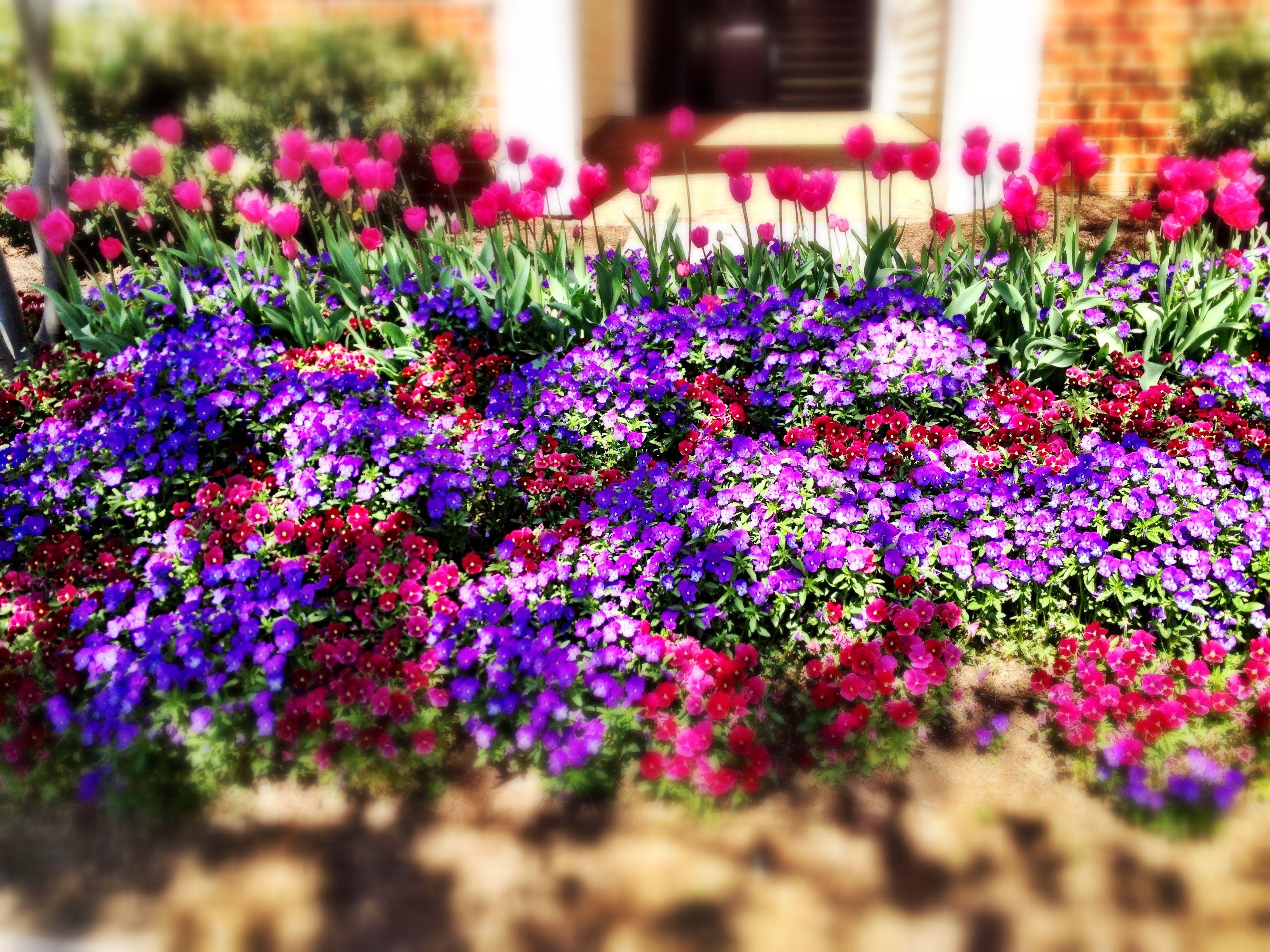 amazing flower bed decorating