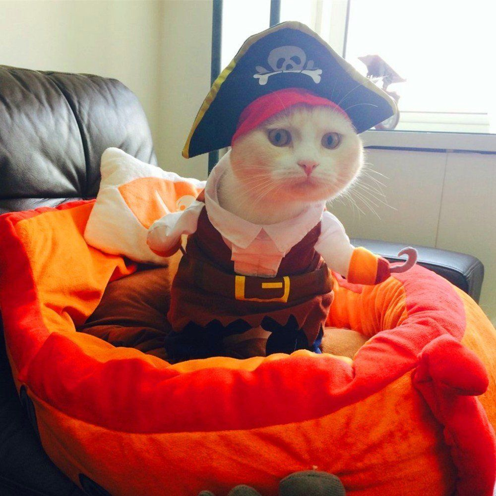 Misula Cool Caribbean Pirate Pet Halloween Costume For Small To Medium Dogs Cats Medium Size Be Sure To C Pet Halloween Costumes Cat Costumes Pet Clothes