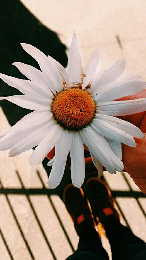 Tem razão, n sou flor q se cheire! Sou flor q se regue, q se cultiva, e q floresce, pq cheirar qualquer um quer, mas cuidar é pra poucos ! 🌼🍀