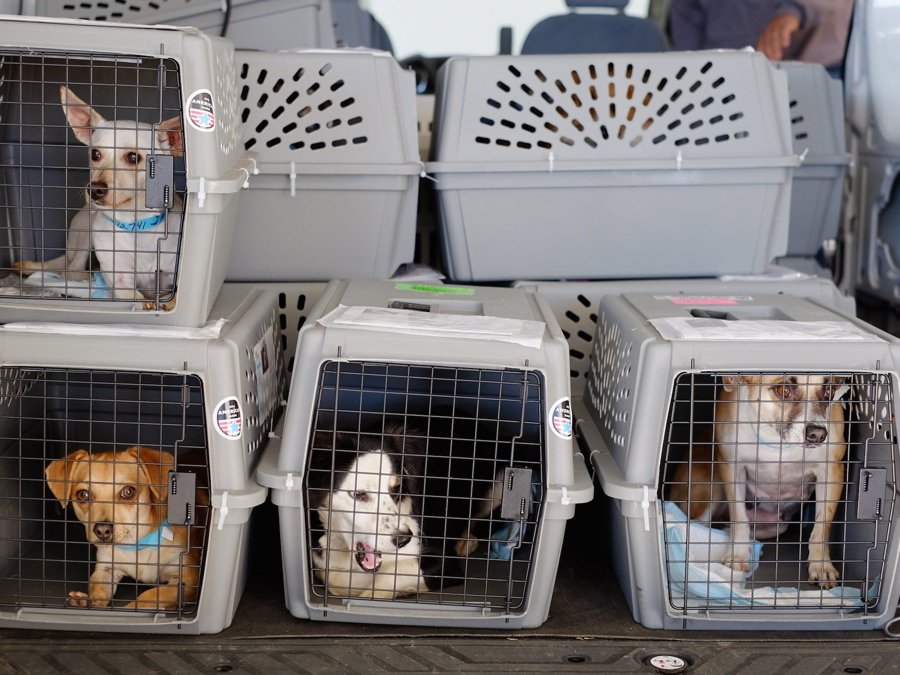 United settles with passenger whose puppy died in overhead