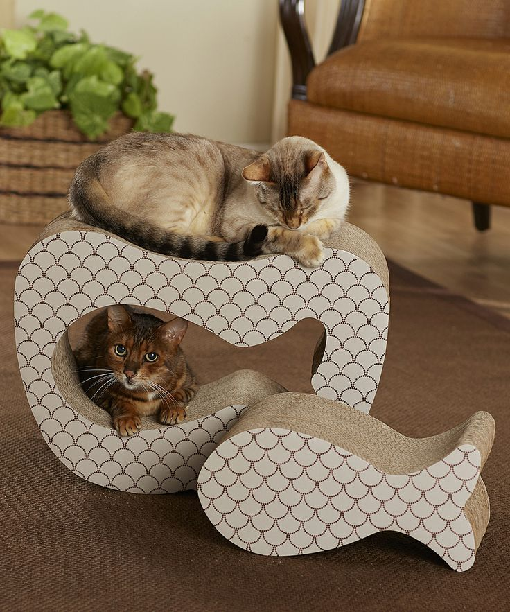 It is a best seller all over the world, more and more cat