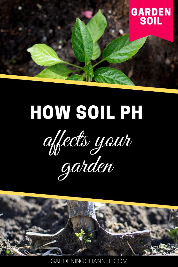 0f30a9d342129c47d489e39ca9313ff1 - How Does Ph Affect Plant Growth And Gardeners Gardens