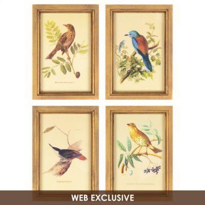 Birds Framed Art Print Set Of 4 Kirklands Bird Wall Art Framed Wall Art Sets Frames On Wall