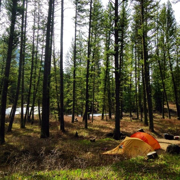 Camping Cabins National Forest Nm: Cabin Creek Campground, Custer Gallatin National Forest